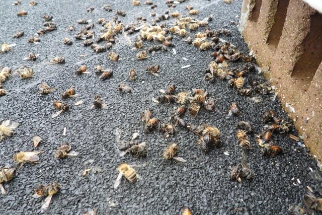 Muerte de las abejas